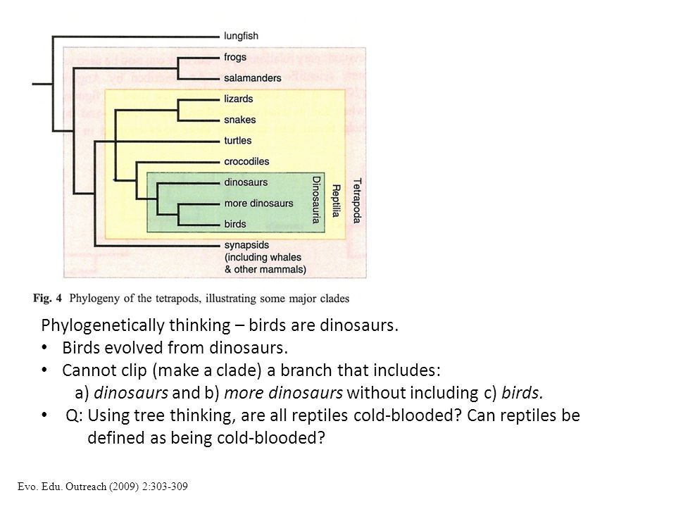Phylogenetically thinking – birds are dinosaurs.