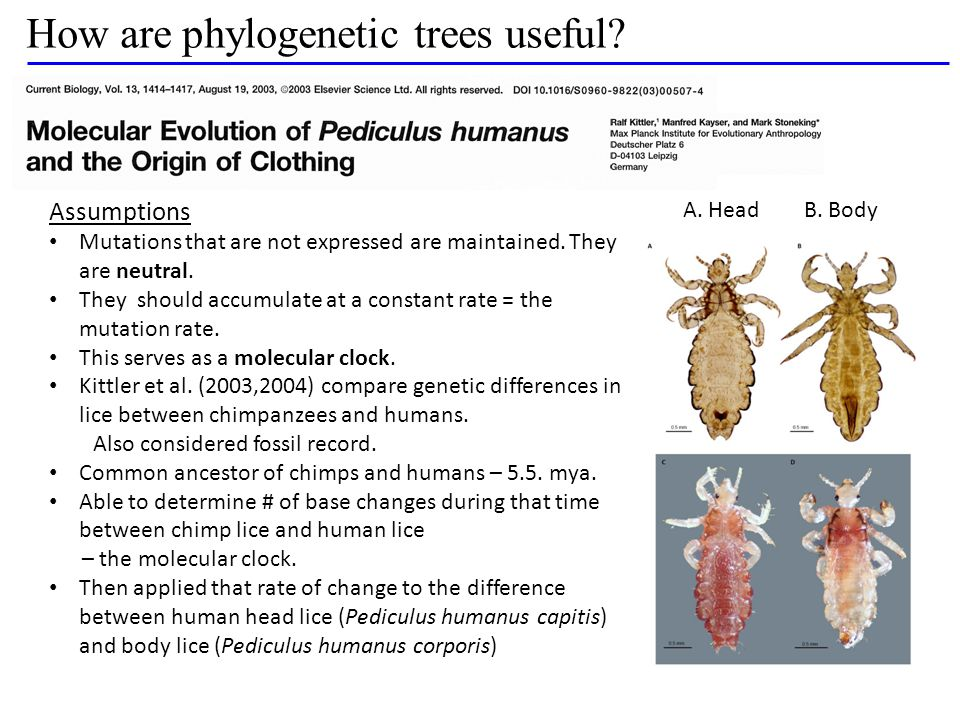 How are phylogenetic trees useful