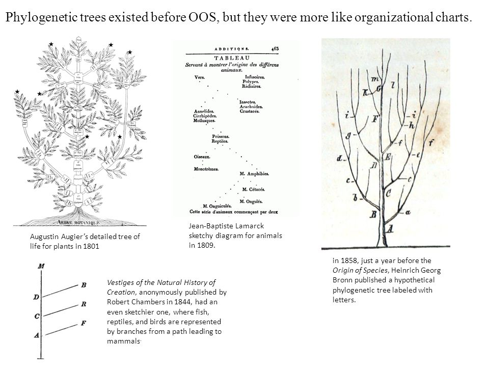 Phylogenetic trees existed before OOS, but they were more like organizational charts.