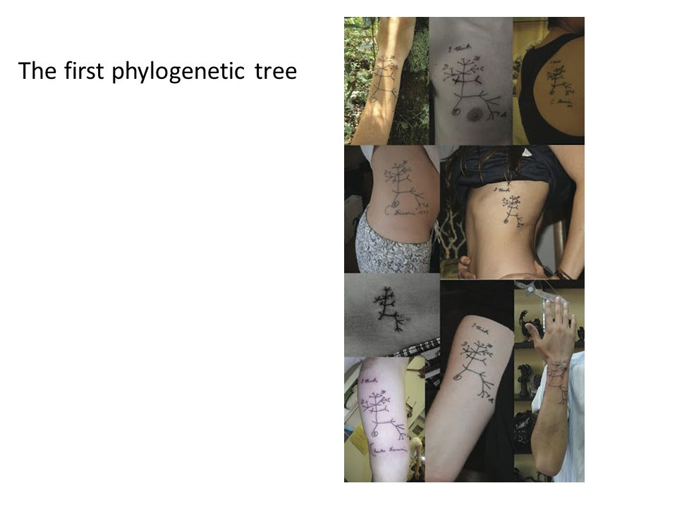 The first phylogenetic tree