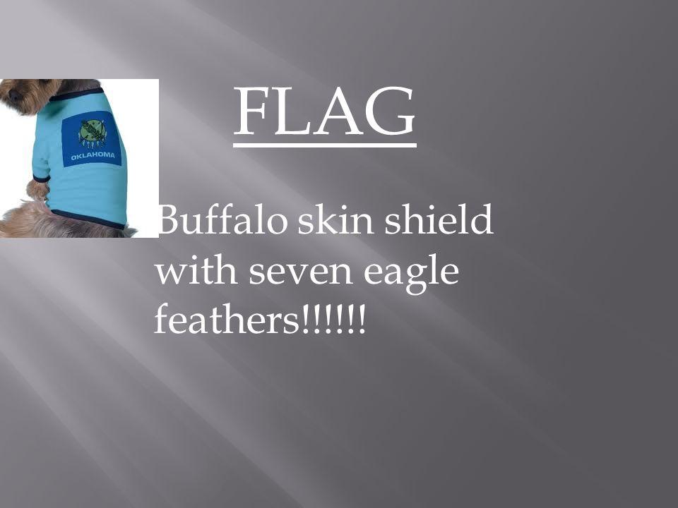 FLAG Buffalo skin shield with seven eagle feathers!!!!!!
