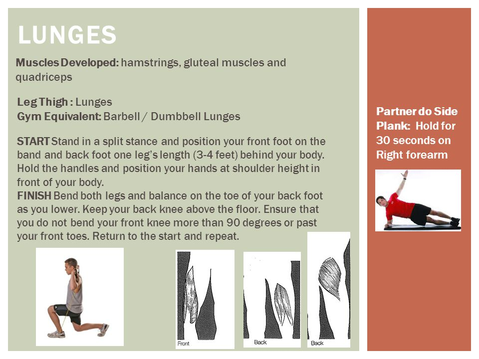 LUNGES Muscles Developed: hamstrings, gluteal muscles and quadriceps