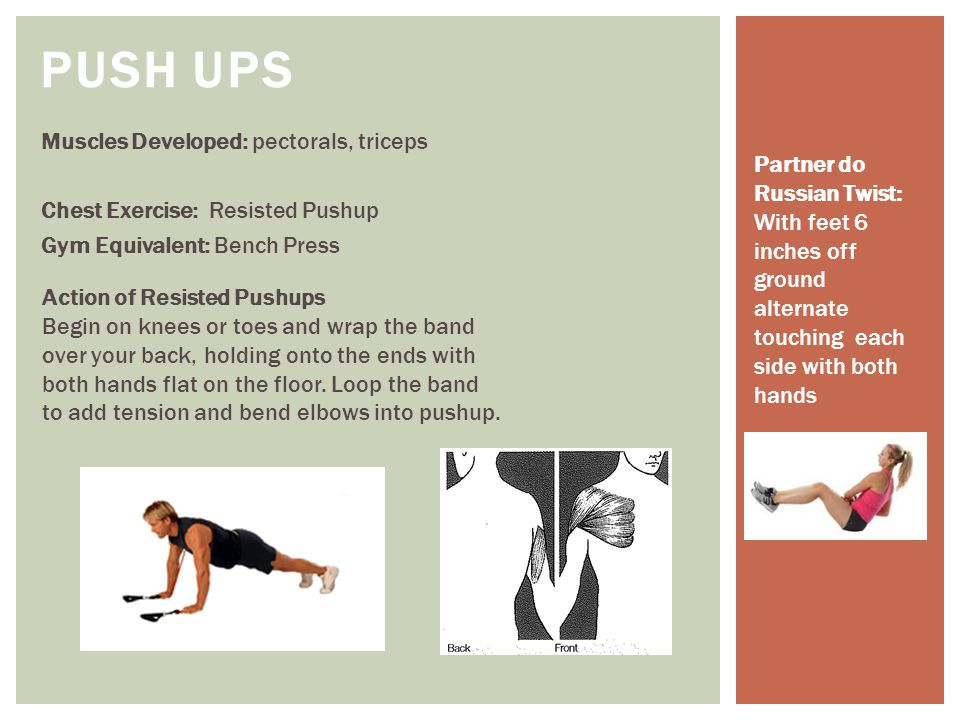 Push Ups Muscles Developed: pectorals, triceps Chest Exercise: Resisted Pushup Gym Equivalent: Bench Press