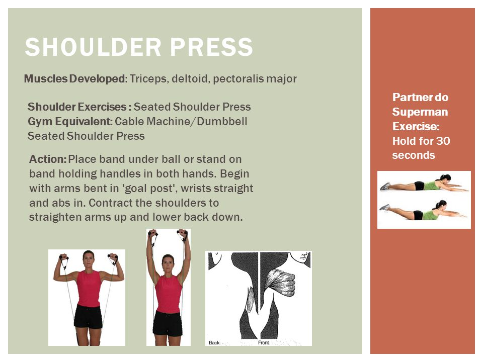 SHOULDER PRESS Muscles Developed: Triceps, deltoid, pectoralis major