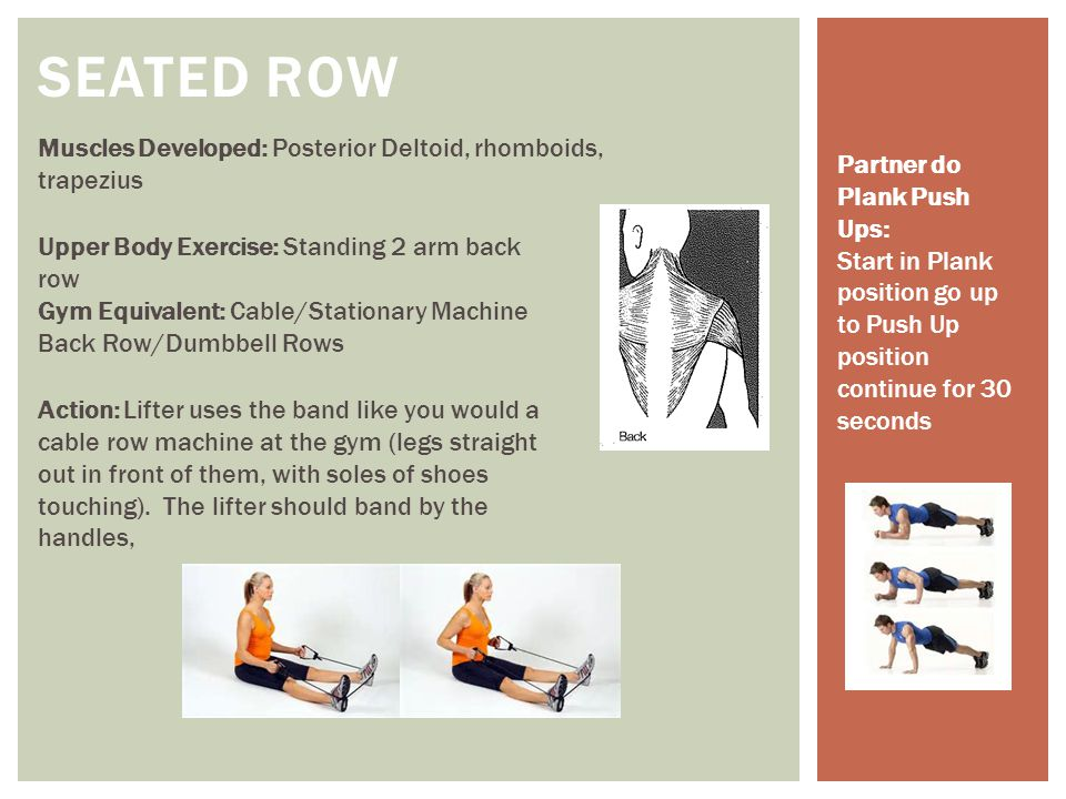 SEATED ROW Muscles Developed: Posterior Deltoid, rhomboids, trapezius