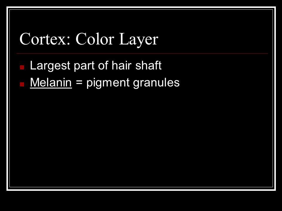 Cortex: Hair Pigmentation