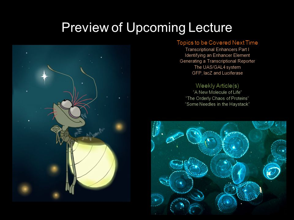 Preview of Upcoming Lecture