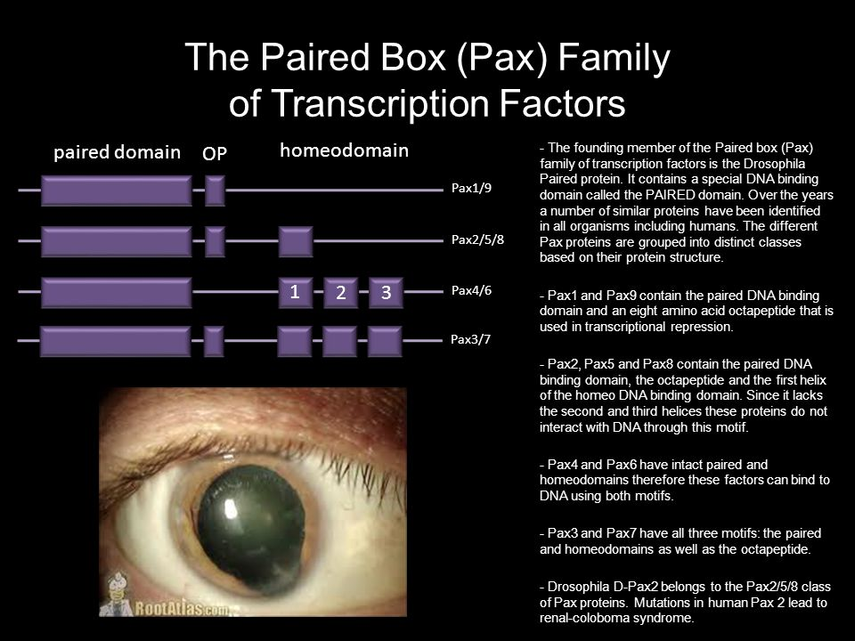 The Paired Box (Pax) Family of Transcription Factors