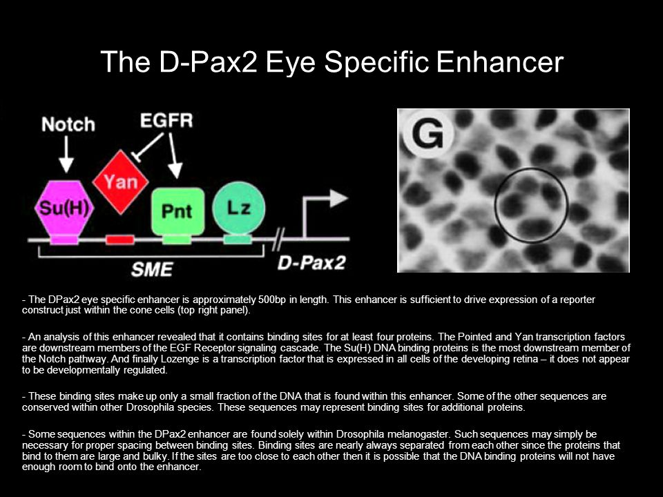 The D-Pax2 Eye Specific Enhancer