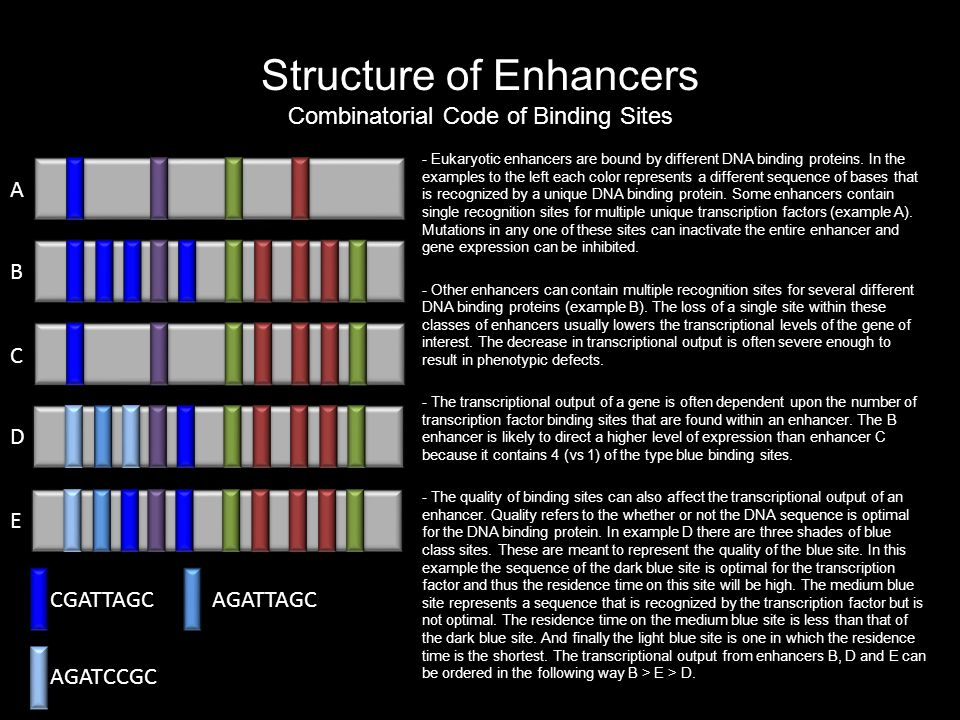 Structure of Enhancers Combinatorial Code of Binding Sites