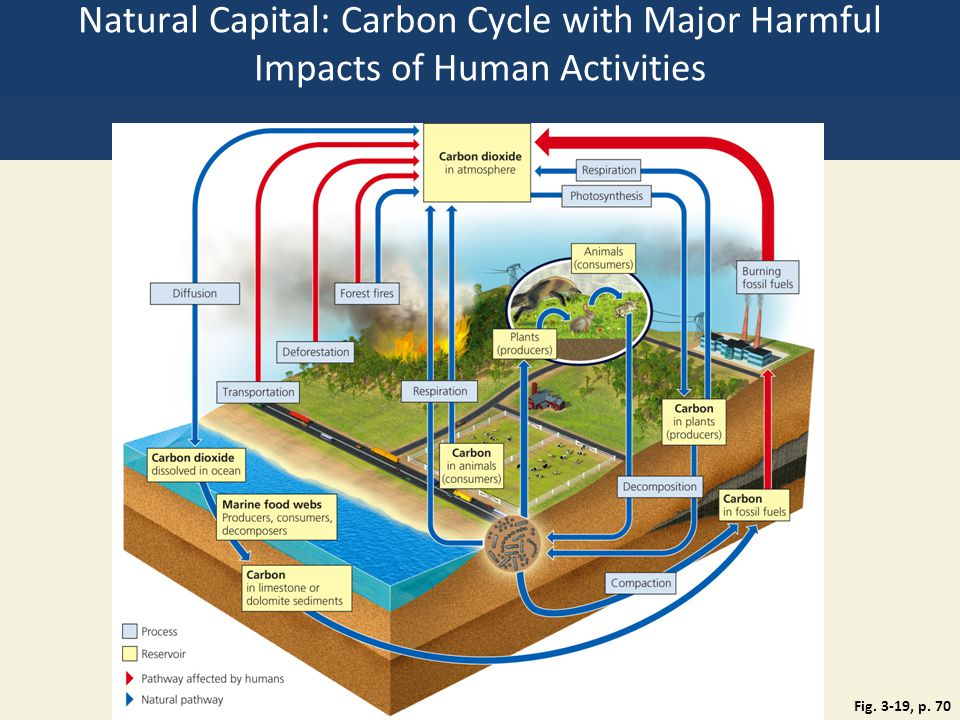 Natural Capital: Carbon Cycle with Major Harmful Impacts of Human Activities