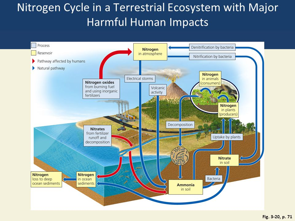 Nitrogen Cycle in a Terrestrial Ecosystem with Major Harmful Human Impacts