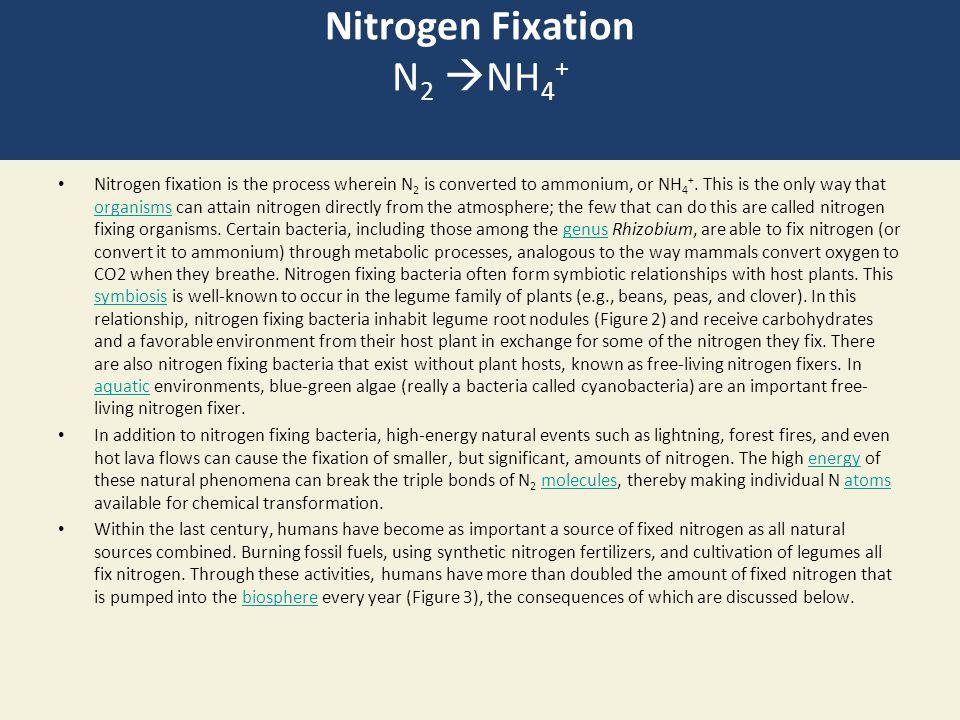 Nitrogen Fixation N2 NH4+