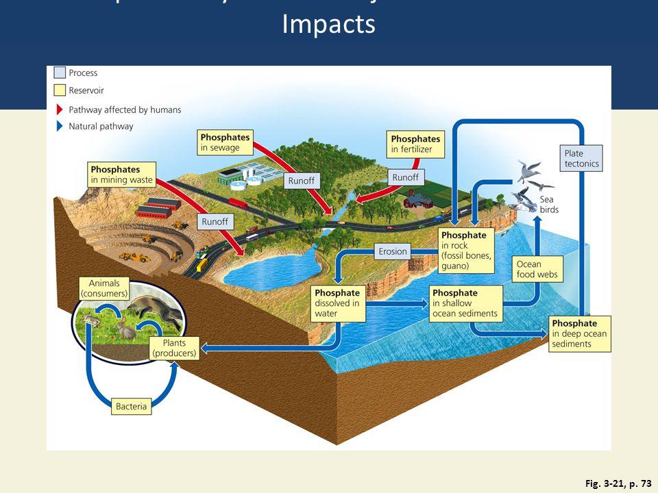 Phosphorus Cycle with Major Harmful Human Impacts
