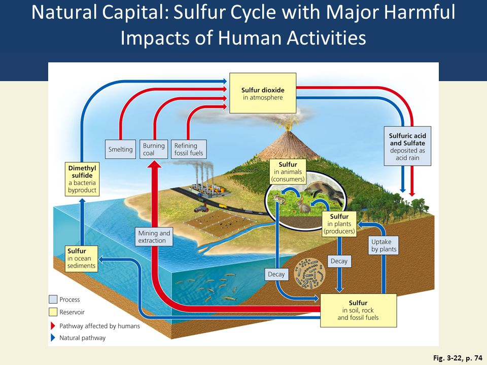 Natural Capital: Sulfur Cycle with Major Harmful Impacts of Human Activities