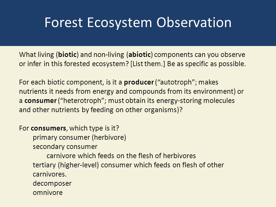 Forest Ecosystem Observation