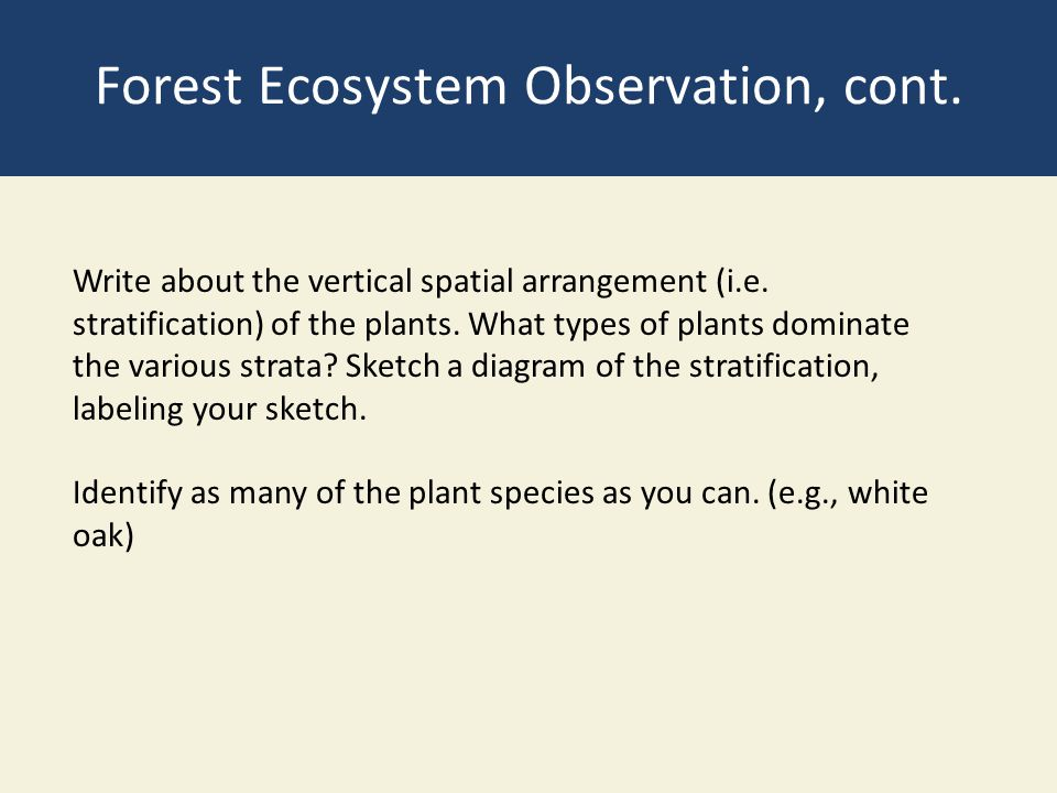 Forest Ecosystem Observation, cont.
