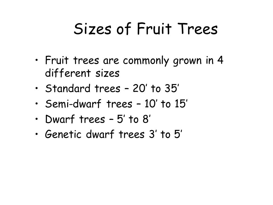 Sizes of Fruit Trees Fruit trees are commonly grown in 4 different sizes. Standard trees – 20' to 35'