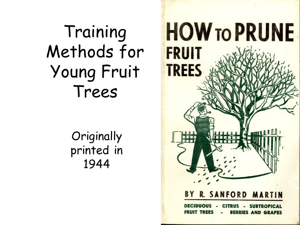 Training Methods for Young Fruit Trees