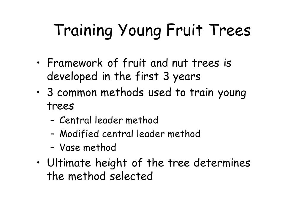 Training Young Fruit Trees