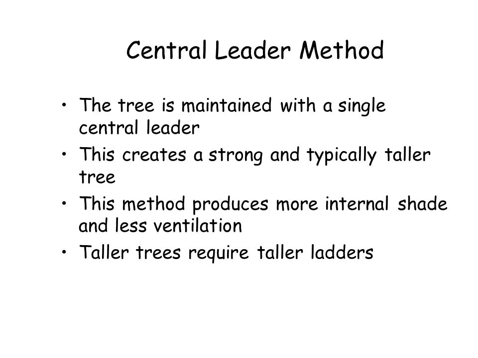 Central Leader Method The tree is maintained with a single central leader. This creates a strong and typically taller tree.
