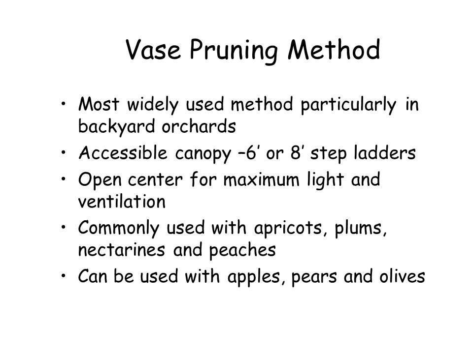 Vase Pruning Method Most widely used method particularly in backyard orchards. Accessible canopy –6' or 8' step ladders.
