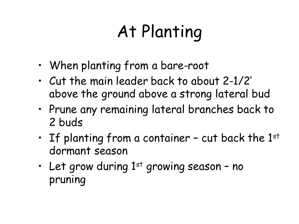 At Planting When planting from a bare-root