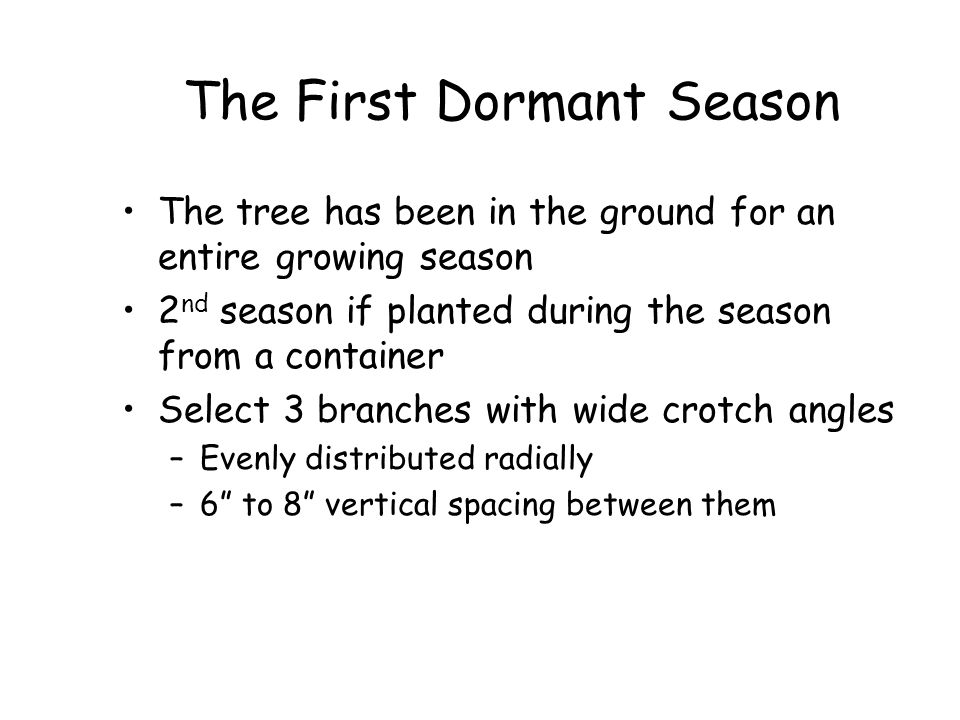 The First Dormant Season