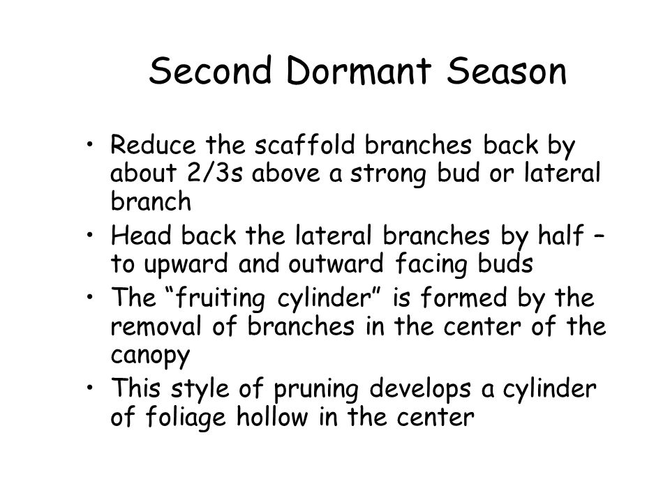 Second Dormant Season Reduce the scaffold branches back by about 2/3s above a strong bud or lateral branch.