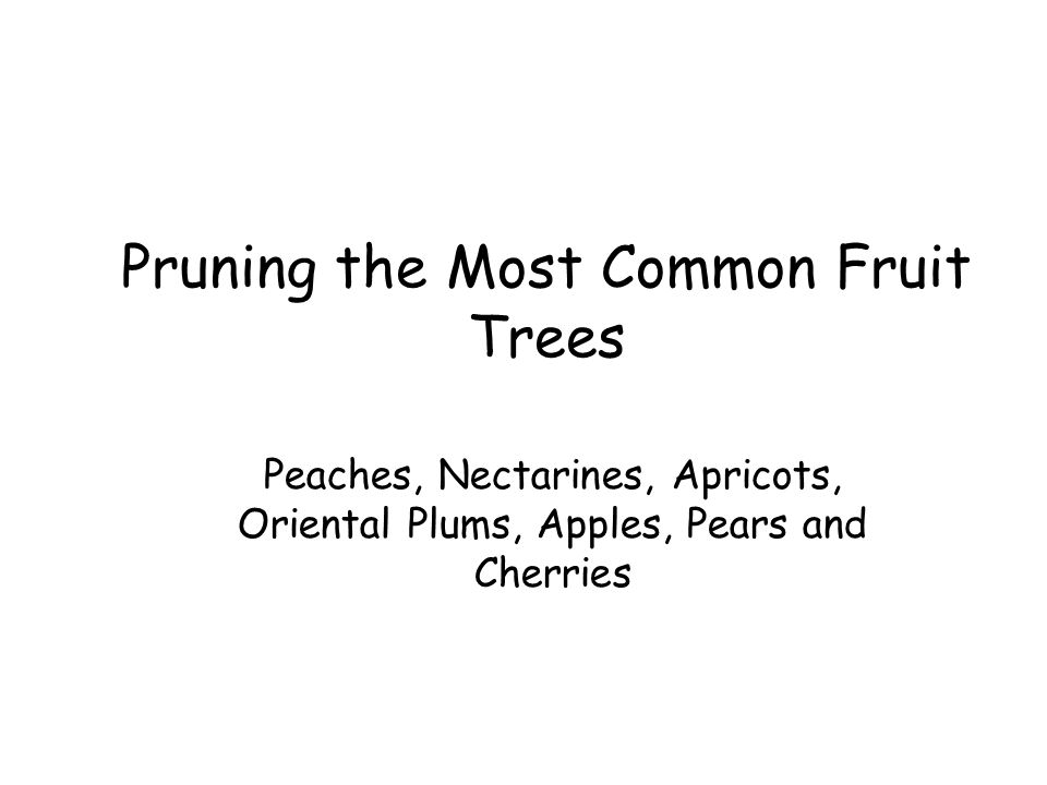 Pruning the Most Common Fruit Trees