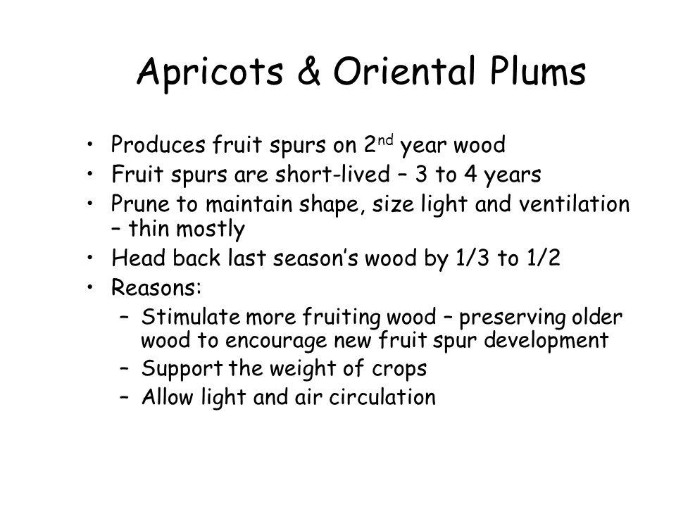 Apricots & Oriental Plums