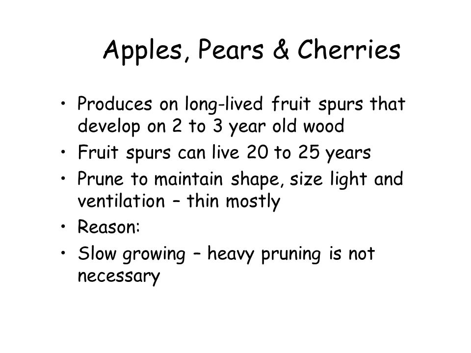 Apples, Pears & Cherries