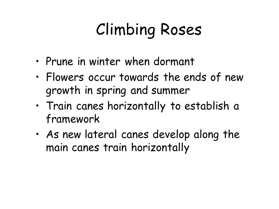 Climbing Roses Prune in winter when dormant
