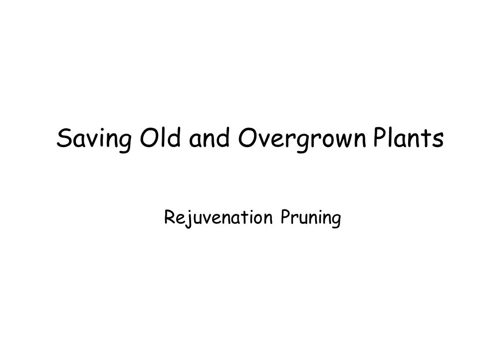 Saving Old and Overgrown Plants