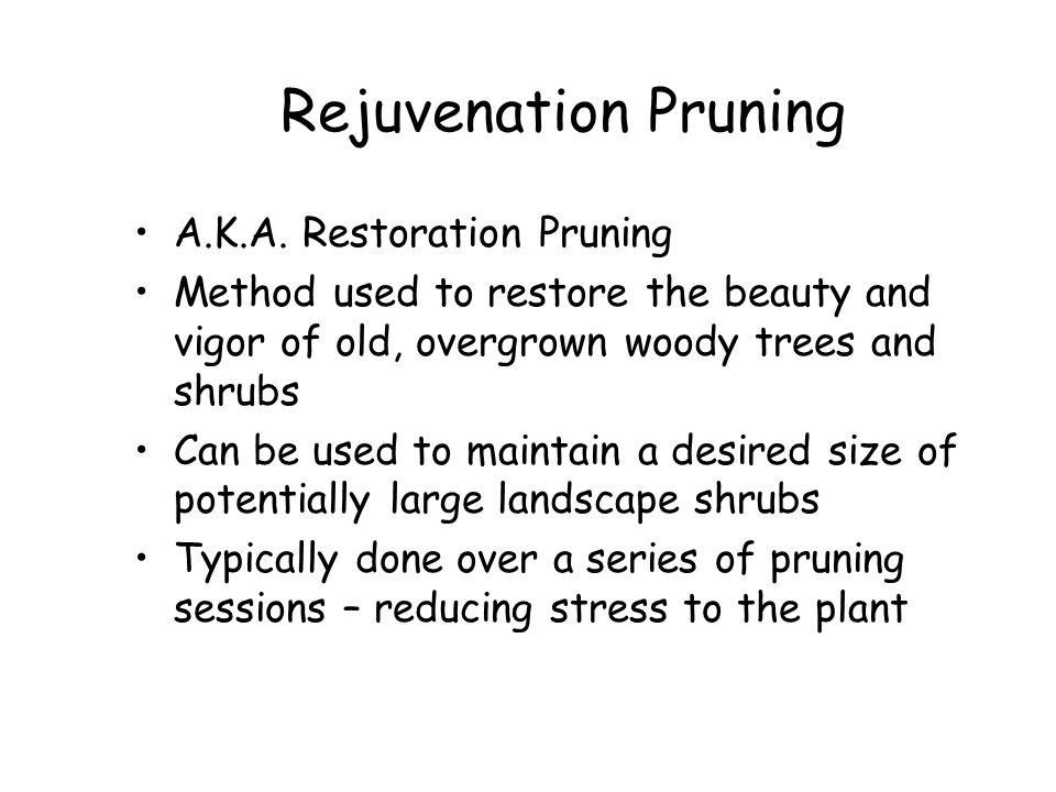 Rejuvenation Pruning A.K.A. Restoration Pruning