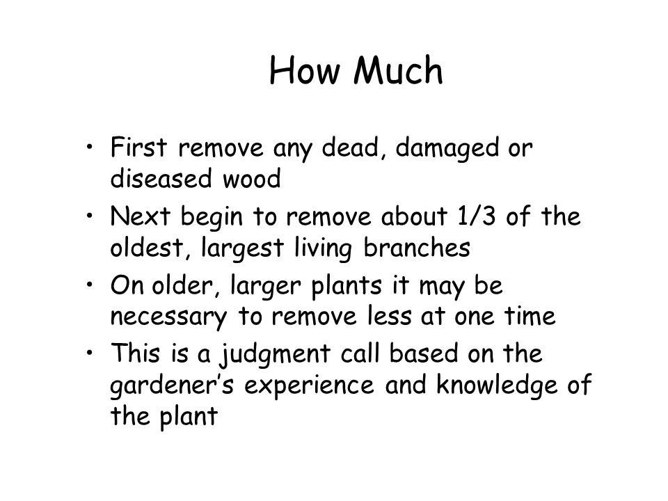 How Much First remove any dead, damaged or diseased wood