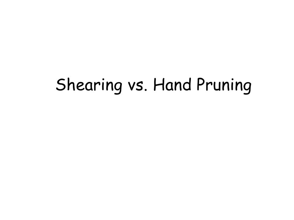 Shearing vs. Hand Pruning