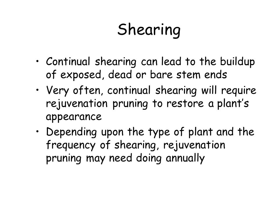 Shearing Continual shearing can lead to the buildup of exposed, dead or bare stem ends.