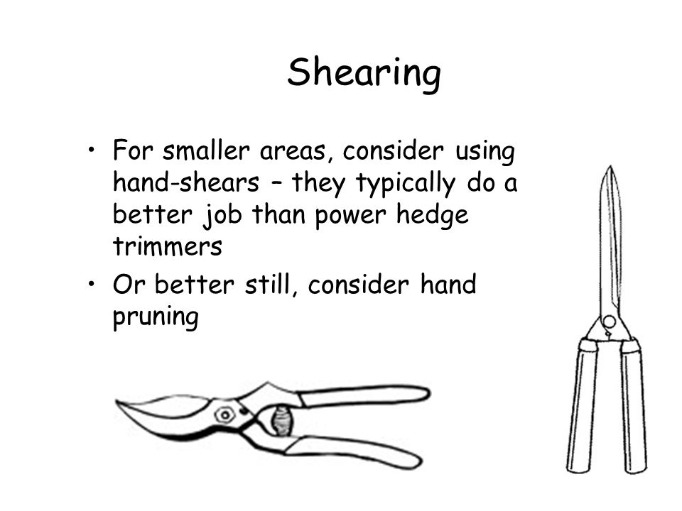 Shearing For smaller areas, consider using hand-shears – they typically do a better job than power hedge trimmers.