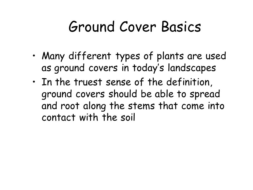 Ground Cover Basics Many different types of plants are used as ground covers in today's landscapes.