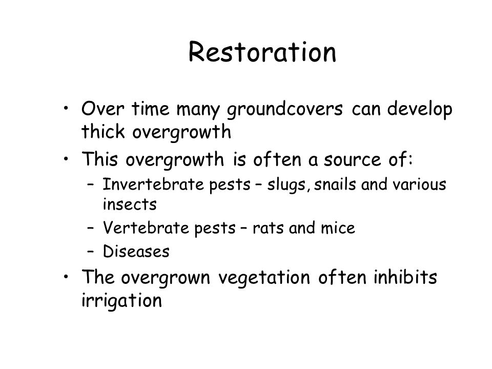 Restoration Over time many groundcovers can develop thick overgrowth