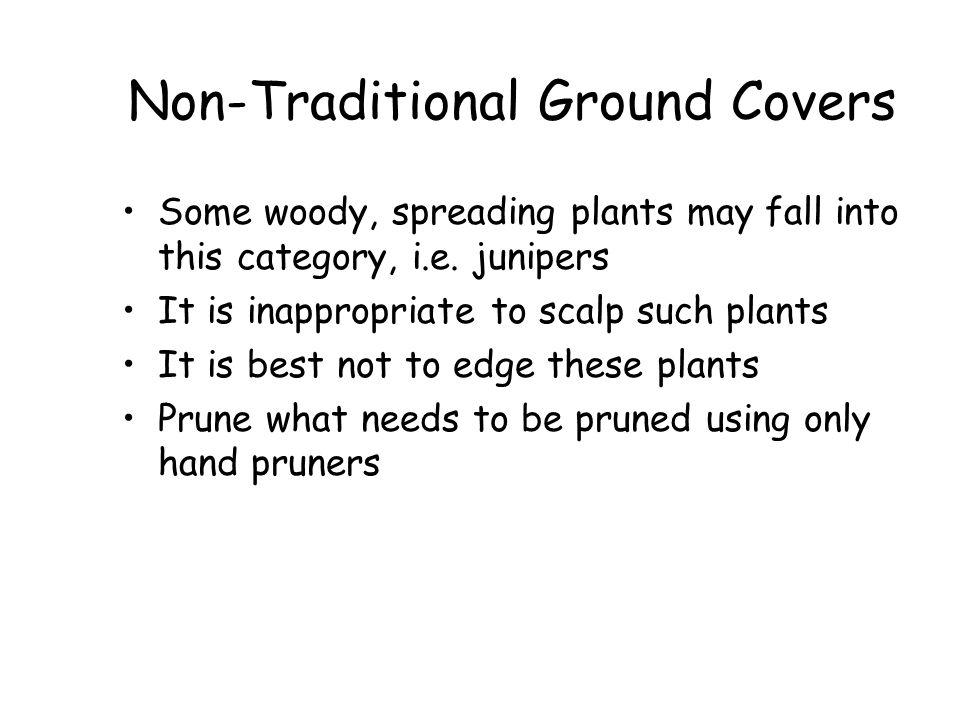 Non-Traditional Ground Covers
