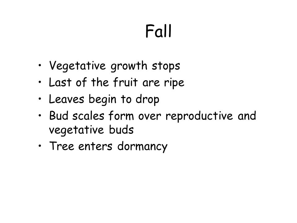Fall Vegetative growth stops Last of the fruit are ripe