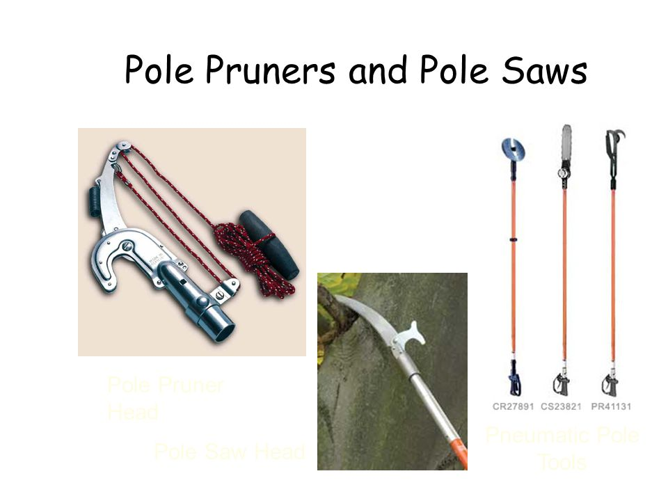 Pole Pruners and Pole Saws