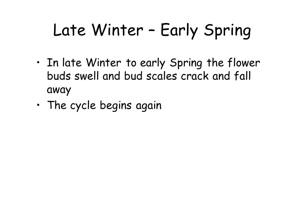 Late Winter – Early Spring