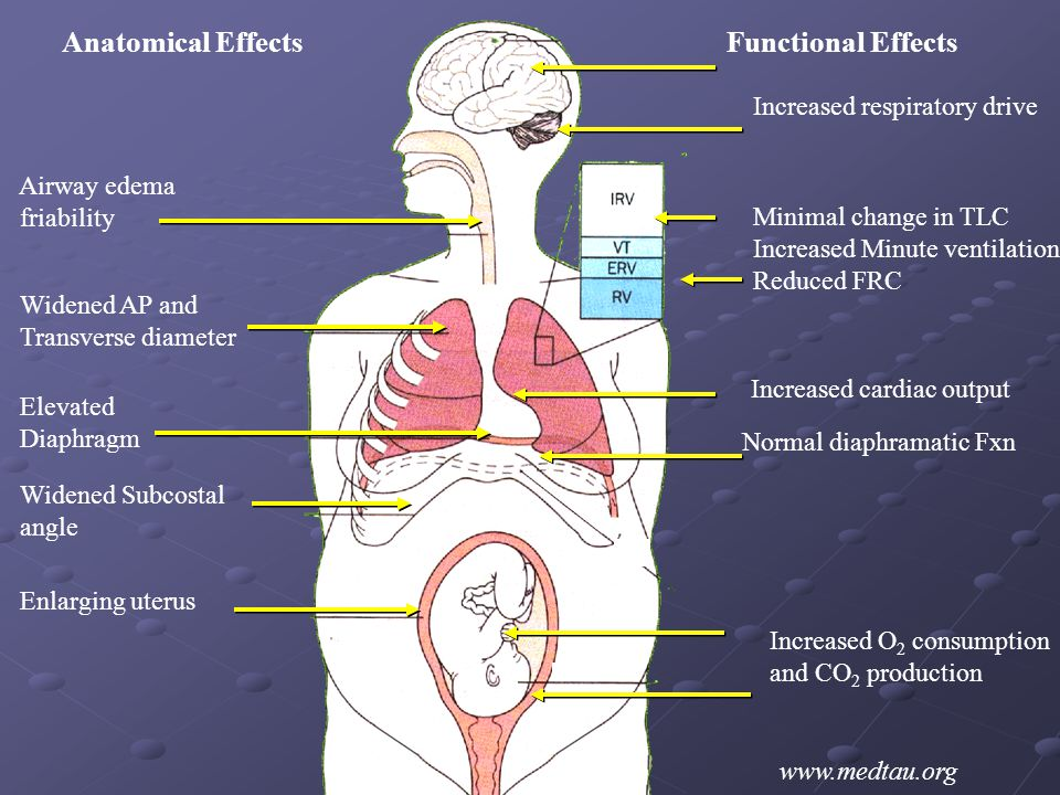 Anatomical Effects Functional Effects Increased respiratory drive