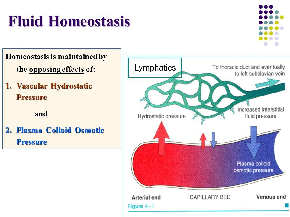 15/07/1438 Fluid Homeostasis. Homeostasis is maintained by the opposing effects of: Vascular Hydrostatic Pressure.