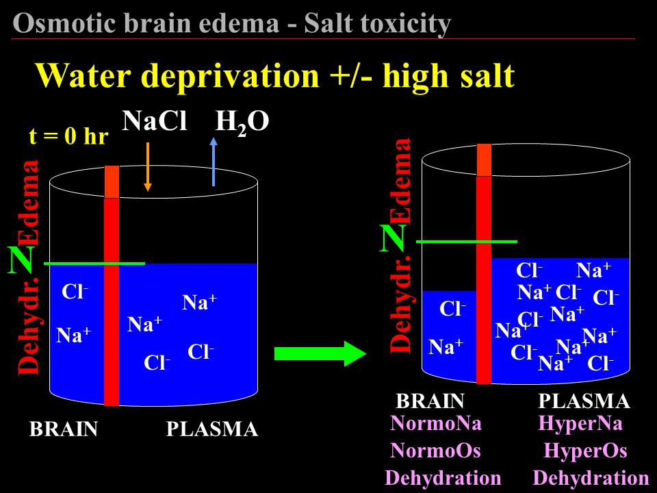 N N Water deprivation +/- high salt