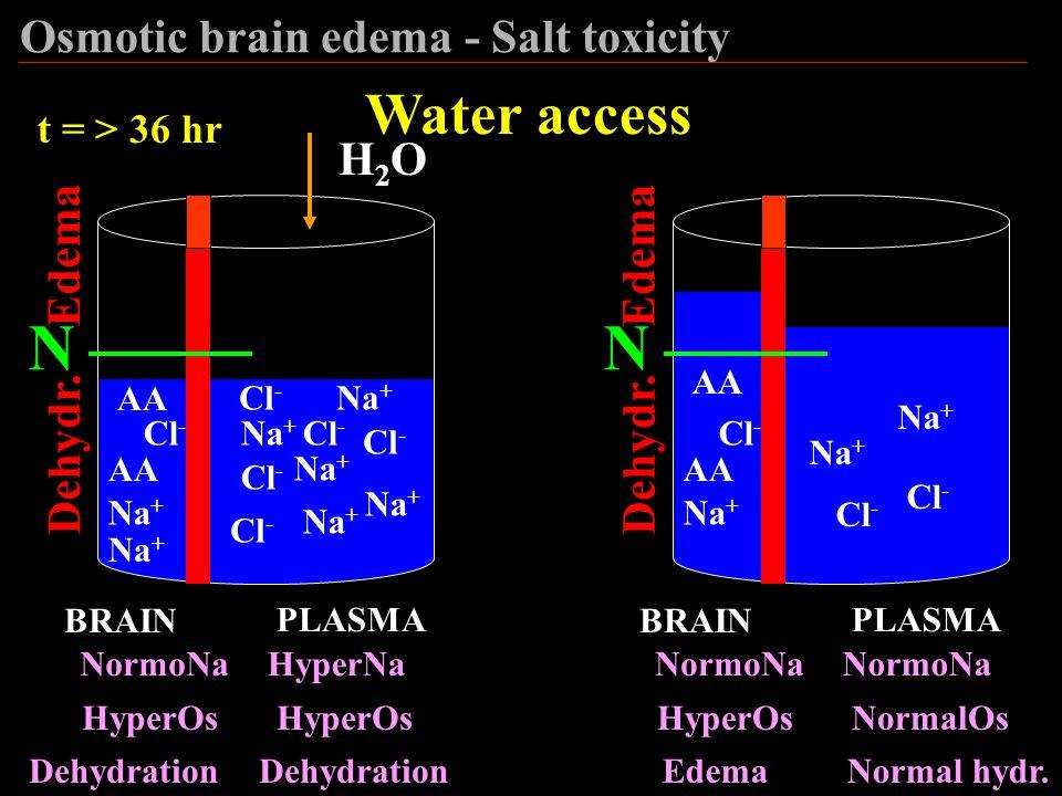 N N Water access Osmotic brain edema - Salt toxicity H2O Edema Edema