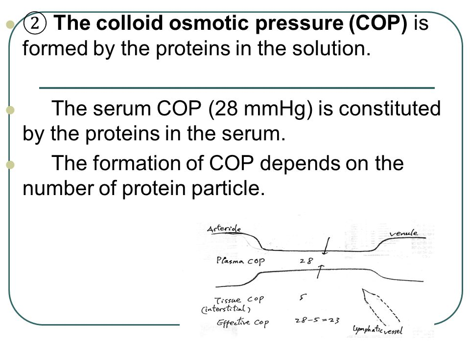 The serum COP (28 mmHg) is constituted by the proteins in the serum.